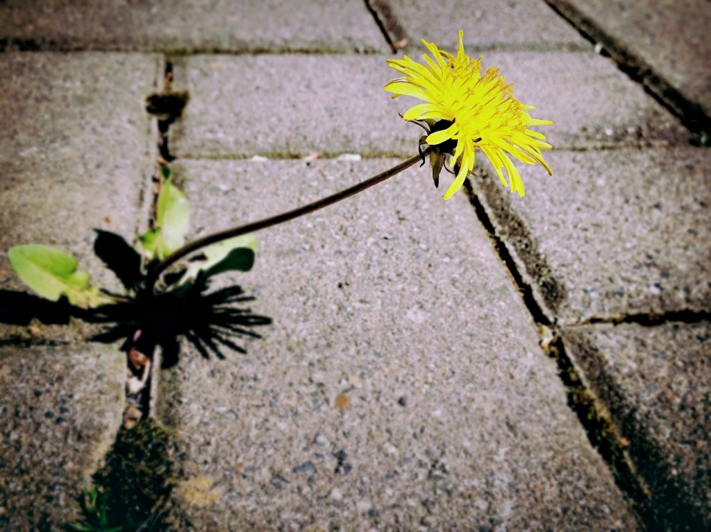 weeds in sidewalk